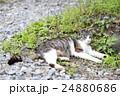 野良猫 24880686
