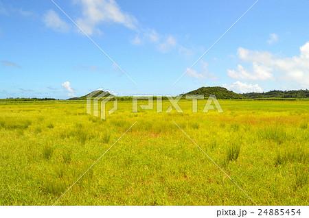 宮古島の草原 24885454