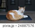 家の玄関の前で見張る番猫 24887576