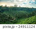 ライステラス 棚田 バリ島の写真 24911124