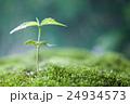 芽吹き 苔 芽の写真 24934573