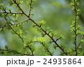 新緑 若葉 芽吹きの写真 24935864