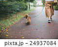 dog lover 24937084