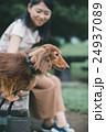 ペット 犬 ミニチュアダックスフンドの写真 24937089