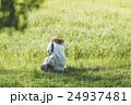 春の散歩 24937481