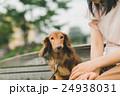 dog lover 24938031