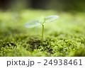 芽吹き 苔 芽の写真 24938461