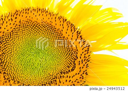 ひまわりの花の中心部アップ 24943512