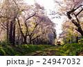 桜と津軽鉄道 24947032
