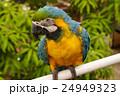 鳥 青 金の写真 24949323