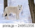 森林 林 森の写真 24951356
