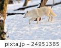 森林 林 森の写真 24951365