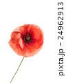 フラワー 花 ポピーの写真 24962913