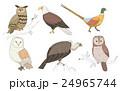 鳥 イーグル ワシのイラスト 24965744
