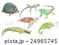 動物 ワニ イグアナ 24965745