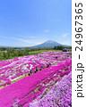 羊蹄山 花畑 芝ざくら庭園の写真 24967365