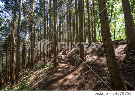 堂所山から明王峠へ・登山コース 24979759