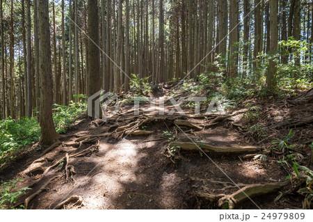 堂所山から明王峠へ・登山コース 24979809