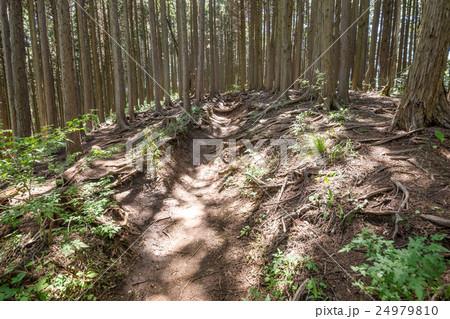 堂所山から明王峠へ・登山コース 24979810