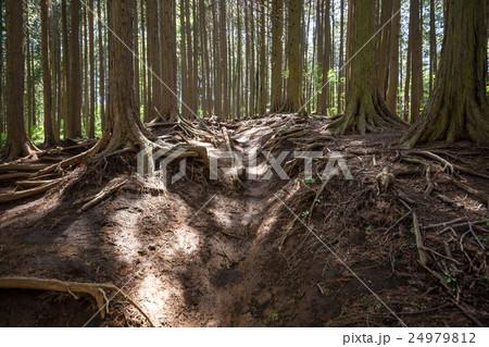 堂所山から明王峠へ・登山コース 24979812