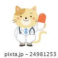 獣医 ネコ イラスト 24981253