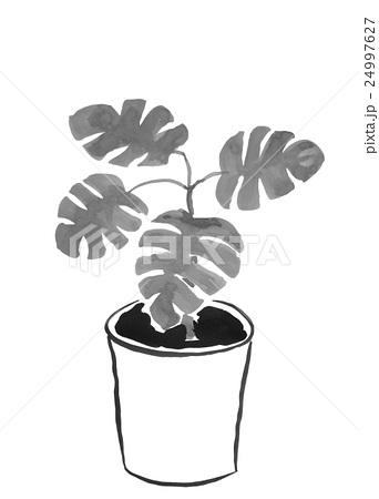 水墨画の観葉植物(モンステラ) <インテリアのイメージ>のイラスト素材 [24997627] - PIXTA
