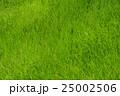 草 草原 一面の写真 25002506