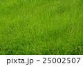 草 草原 一面の写真 25002507