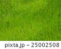 草 草原 一面の写真 25002508
