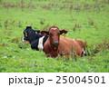 函館城岱牧場のウッシー 25004501