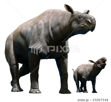 Paraceratherium with calf 25007548