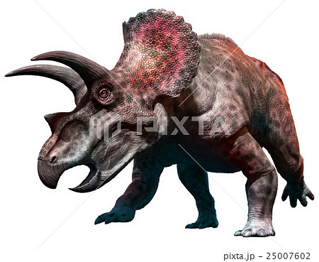 Triceratops 25007602
