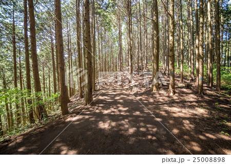 明王峠から陣馬山へ・登山コース 25008898
