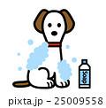 犬を洗う 25009558