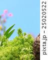 多肉植物 25020522