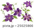 クレマチス 鉄線 花のイラスト 25025866