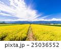 安曇野 田園風景 田園の写真 25036552