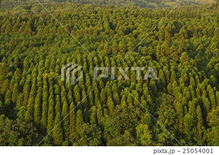 夕暮れの森 25054001