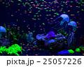 魚 魚類 水中の写真 25057226