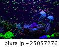 魚 魚類 水中の写真 25057276