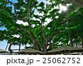 モアナ・サーフライダーの「ザ・ビーチ・バー」の木 25062752