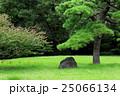 彼岸花 花 浜離宮の写真 25066134