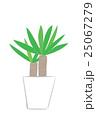 観葉植物(ユッカ) <インテリアのイメージ>  25067279