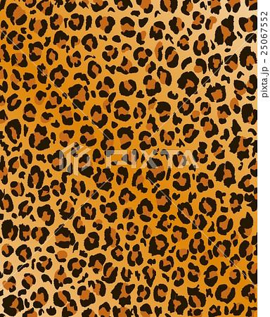 豹柄のイラスト素材 [25067552] ...