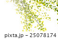 銀杏 イチョウ 葉っぱの写真 25078174