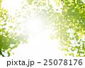 銀杏 イチョウ 葉っぱの写真 25078176