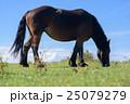 馬 25079279