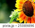 咲く 花 開花の写真 25089896