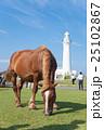 尻屋崎灯台と寒立馬 25102867