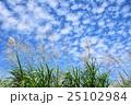 うろこ雲 雲 ススキの写真 25102984